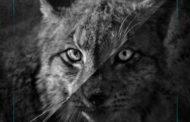 INYOURFACE presentan su nuevo videoclip «Savanna»