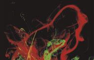 [Reseña] de «El Elixir» el nuevo disco de ROJO OMEGA