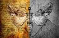 Social Disorder estrena el single «Love 2 Be Hated»