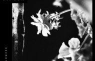 Review: Jinjer «Wallflowers»